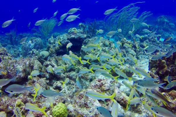 Protection de la biodiversité, au-delà des juridictions nationales